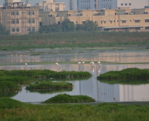 Pallikaranai Marsh development