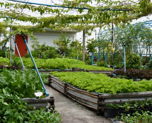 rooftop-gardening-india-regenerative-organic-agriculture-roof-top-gardens-for-climate